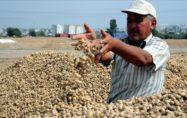 Adana ve Osmaniye'de geçen yıl 140 bin 796 ton yer fıstığı üretildi