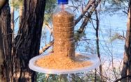 Osmaniye'de kuşlar için doğaya yem bırakıldı