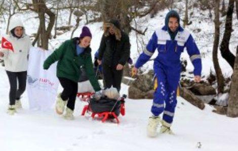 Üniversiteliler, kızaklarla hayvanlar için yiyecek taşıdı