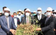 Yer fıstığı üretiminde Şırnak ilk 3'e yerleşti