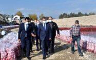 Türkiye'de turpun yüzde 74'ü Osmaniye'de üretiliyor