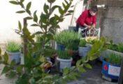 """Atık malzemelerle """"evin çatısında"""" çiçek, sebze ve meyve yetiştiriyor"""