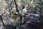 Kadirli ilçesinde anız yangını ormanlık alana sıçradı, 3 dekar ormanlık alan zarar gördü